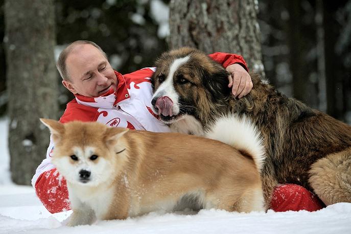 """Tổng thống Nga Vladimir Putin và chú chó Yume (tiếng Nhật nghĩa là """"Giấc mơ"""" - món quà Tống đốc tỉnh Akita, Nhật Bản) và chú chó Buffy của Bulgaria, đi dạo trong một khu rừng tuyết phủ bên ngoài Mátxcơva năm 2013. Ảnh: Tass"""