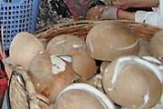 Hỗ trợ Bến Tre, vùng ĐBSCL phát triển cây dừa