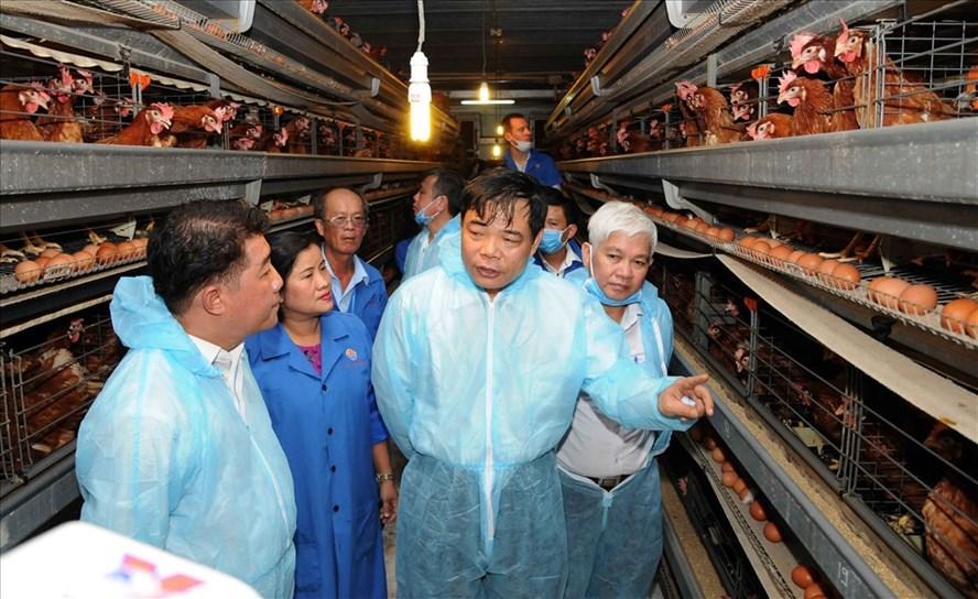 Bộ trưởng Bộ NN-PTNT Nguyễn Xuân Cường (thứ 2, phải qua), đang tham quan trại gà lạnh của Tập đoàn Hùng Nhơn ở Bình Phước. Từ trại gà này, những con gà được nuôi đạt chuẩn Global Gap để xuất sang thị trường Nhật Bản.