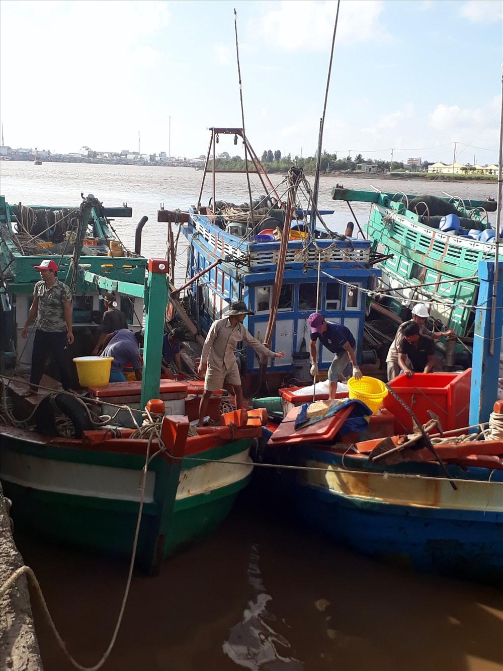 Nhiều tàu đánh cá đã vào cửa biển Gành Hào trú ẩn an toàn (ảnh Nhật Hồ)