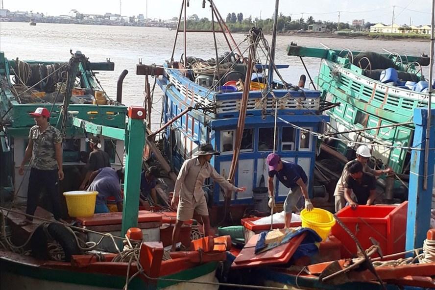 Nhiều tàu đánh cá đã vào cửa biển Gành Hào (Bạc Liêu) trú ẩn. Ảnh: Nhật Hồ
