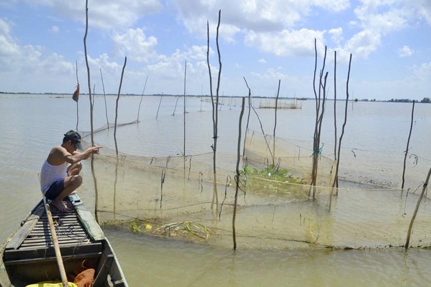 Nước lên cao hơn năm trước đã nhấn chìm đồng đất thành biển nước. Ảnh: L.T