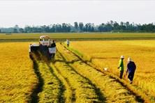 Hướng đến nền nông nghiệp chất lượng cao