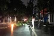 TPHCM mưa lớn gây ngập nặng, cây xanh bật gốc do ảnh hưởng bão số 14