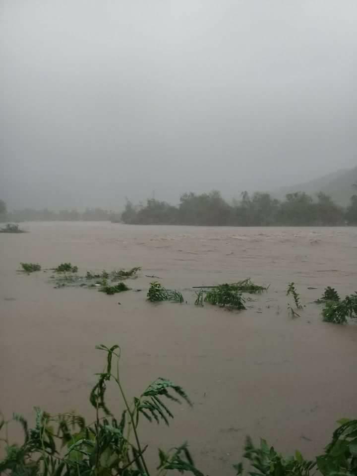 Hai trận lũ liên tiếp trong 5 ngày gây thiệt hại nặng nề vụ lúa Đông Xuân của đồng bào huyện Tuy An