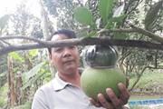 Nhiều loại trái cây, hoa - kiểng cung ứng thị trường tết