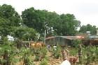 Trồng cây trên đất lấn chiếm, còn đòi hỗ trợ 19 tỉ đồng?