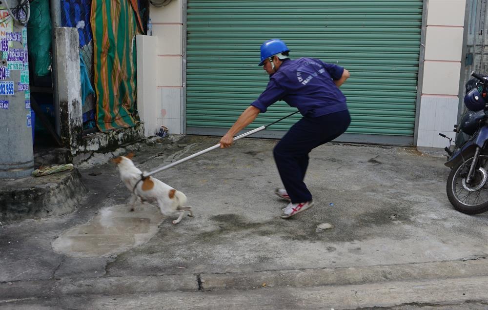 Sau đó vài phút, tại đường số 10 (P.Linh Xuân), một chú chó màu trắng, vằn vàng chạy rông trên đường bị một thành viên trong đội bắt chó dùng gậy thòng lọng bắt gọn.'