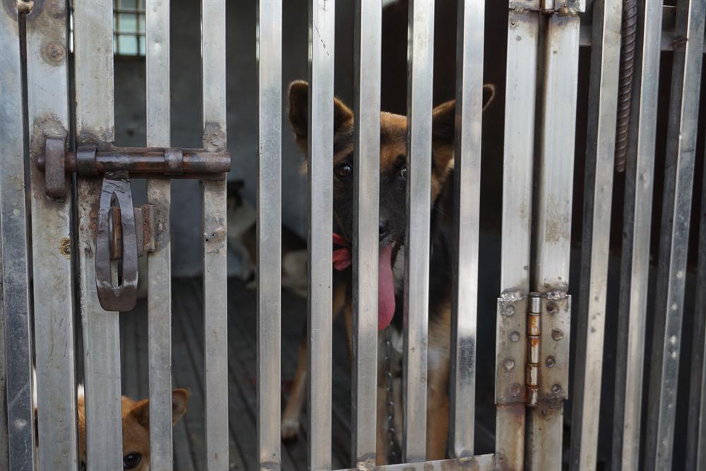 """Đến 9h, sau khi dạo qua thêm một số con hẻm trên địa bàn, thấy tình trạng chó thả rông đã không còn, đội kết thúc công việc với 1 con chó bị tóm gọn. Theo ông Dương Thanh Đa – Đội trưởng Đội bắt chó thả rông - thuộc Chi cục Thú y TP.HCM chia sẻ: """"Đây là công việc rất dễ mất lòng và dễ đụng chạm. Không ít trường hợp các nhân viên bị các chủ nuôi chó hành hung, gây thương tích""""."""