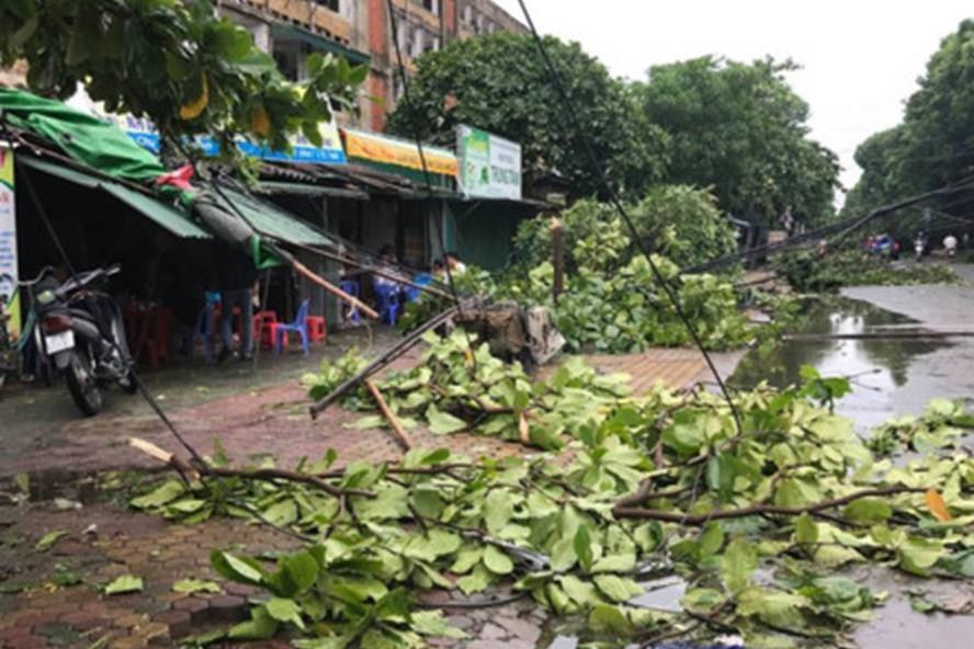 Bão số 2 đi qua Nghệ An ngày 16.7 làm nhiều cây xanh trên địa bàn TP.Vinh bị gãy, đổ. Ảnh: TTT