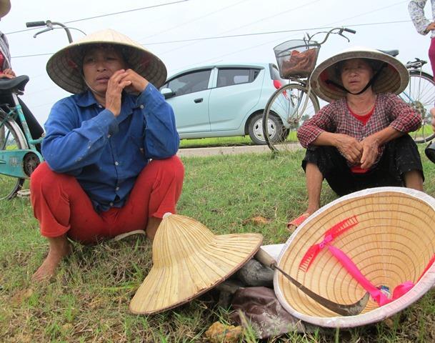 Người dân thẫn thờ nhìn diện tích lúa đang nằm ngoài đồng mà không thể thu hoạch (Ảnh: HT)