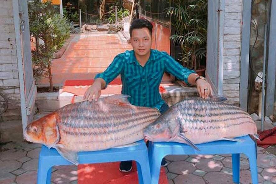 Cặp cá trà sóc nặng gần 1 tạ đưa từ Campuchia về Hà Nội.