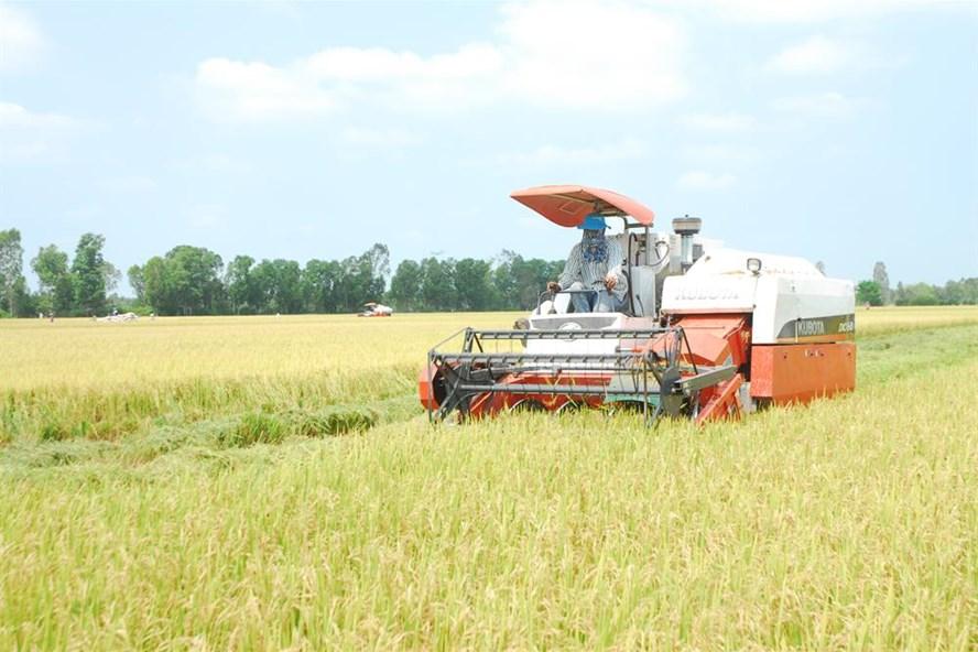 Thu hoạch lúa ở ĐBSCL (ảnh: P.V)