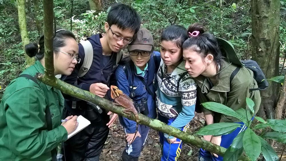 """""""Tôi yêu Sơn Trà"""" giới thiệu một loài bò sát đặc hữu được ghi nhận tại Khu Bảo tồn Thiên nhiên Sơn Trà"""