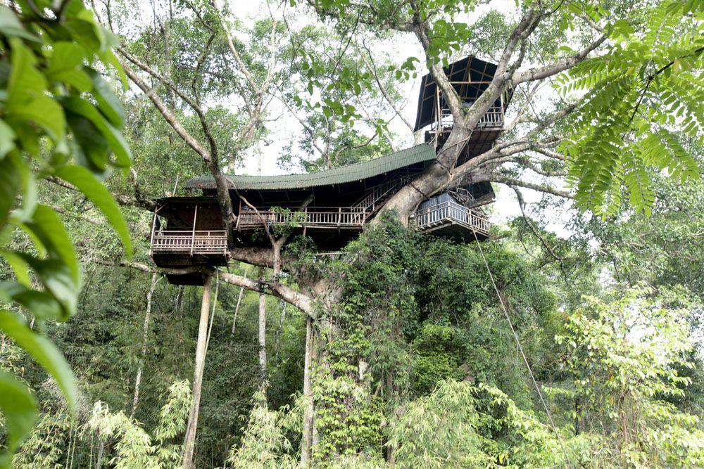 Khách sạn trên cây Gibbon Experience, Lào là một địa điểm tuyệt vời để ngắm nhìn động vật hoang dã gần đó. Bạn cũng có thể treo trên sợi cáp treo băng qua những cánh rừng rậm để di chuyển từ tòa nhà này sang tòa nhà khác.
