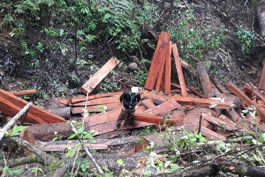 Nhiều cánh rừng bị tàn phá, nhưng các Ban Quản lý bảo vệ rừng lại không hay biết.
