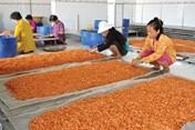 Bán đảo Cà Mau: Áp Tết, các mặt hàng khô khan hiếm