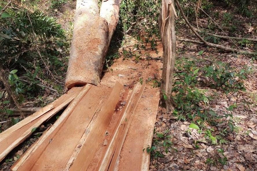 Hiện trường vụ phá rừng.