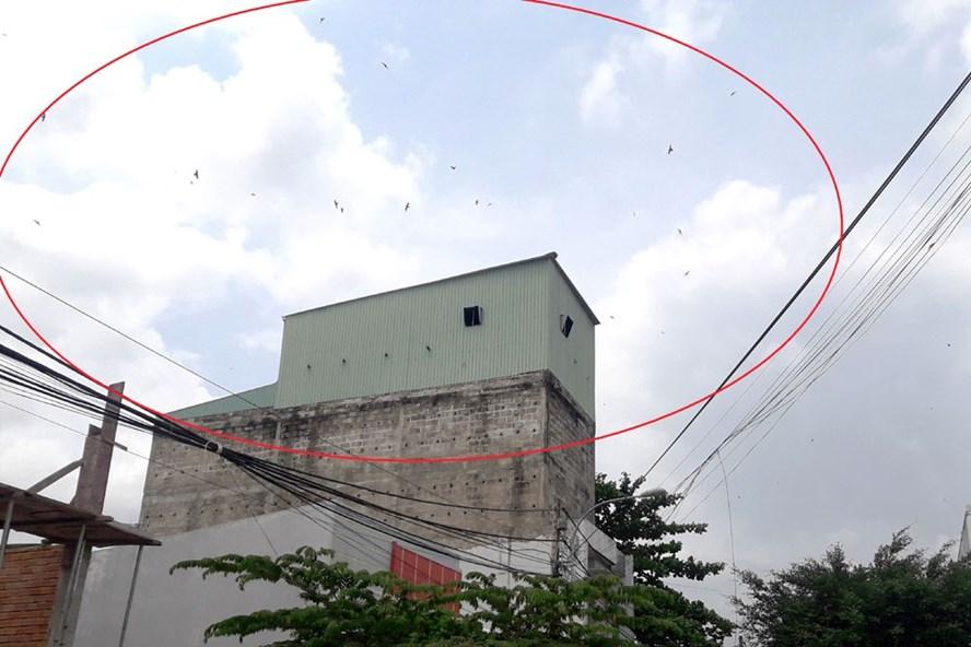 Một nhà nuôi chim yến ở phường An Hòa (TP.Rạch Giá) gây bức xúc cho hộ dân xung quanh. Ảnh: Trần Tuấn.