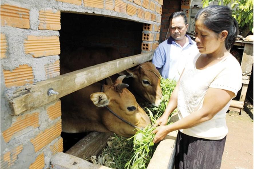 Tín dụng chính sách đã giúp đồng bào DTTS vùng sâu, vùng xa ở tỉnh Đắk Lắk ổn định cuộc sống. Ảnh: Quang Huy