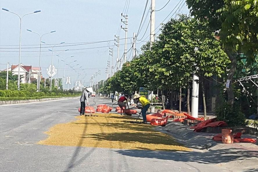 Lúa được phơi đầy trên quốc lộ (ảnh:P.V)