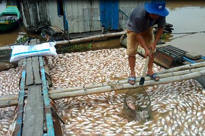 Video: Sốc trước hơn nghìn tấn cá chết trắng sông La Ngà