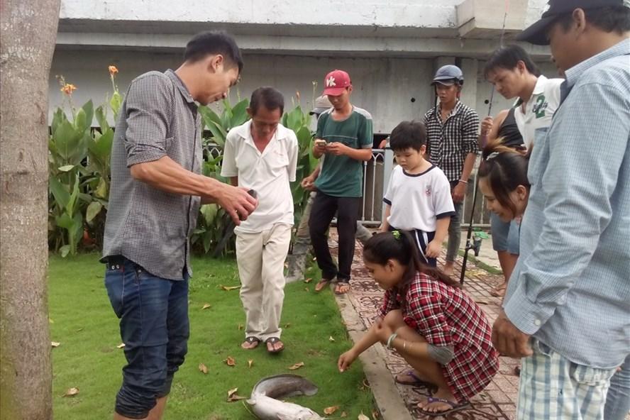 Một con cá trê khoảng 4kg được người dân câu lên từ kênh Nhiêu Lộc-Thị Nghè.  Ảnh: M.Q