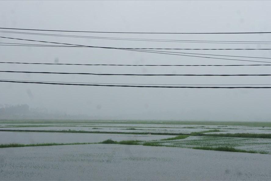 Hàng ngàn hecta lúa tại Hà Tĩnh bị ngập do mưa lũ.