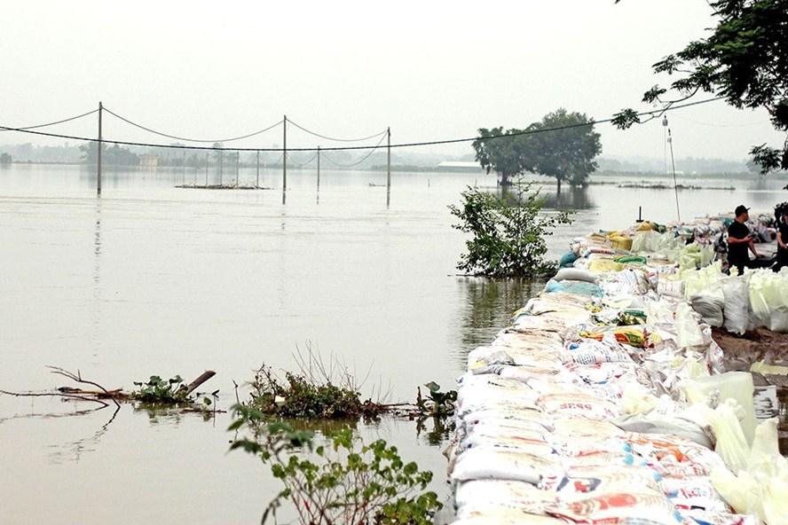 Dự báo, cơn bão số 4 sẽ gây mưa lớn, ảnh hưởng đến mực nước và sự cố đê sông Bùi (Chương Mỹ, Hà Nội). Ảnh: T.Vương