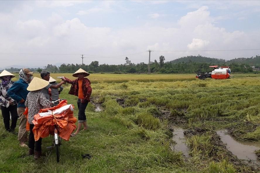 Nông dân thôn Quang Trung khổ sở chờ chiếc máy gặt duy nhất này để thu hoạch lúa. Ảnh: Trần Tuấn
