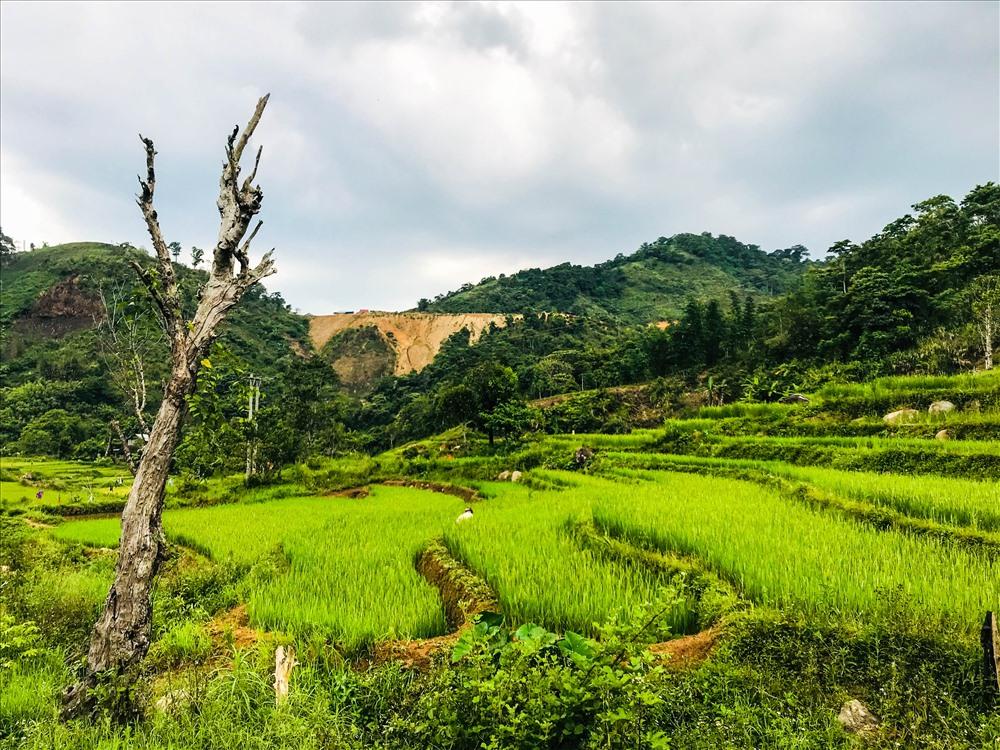 Ruộng bậc thang ở vùng cao Quảng Nam không quy mô như các tỉnh vùng Tây Bắc nước ta do điều kiện địa lý.