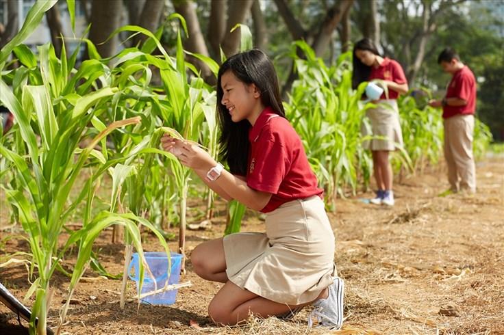 Gần 1000 người đăng ký tham gia chương trình chạy bộ gây quỹ trồng cây