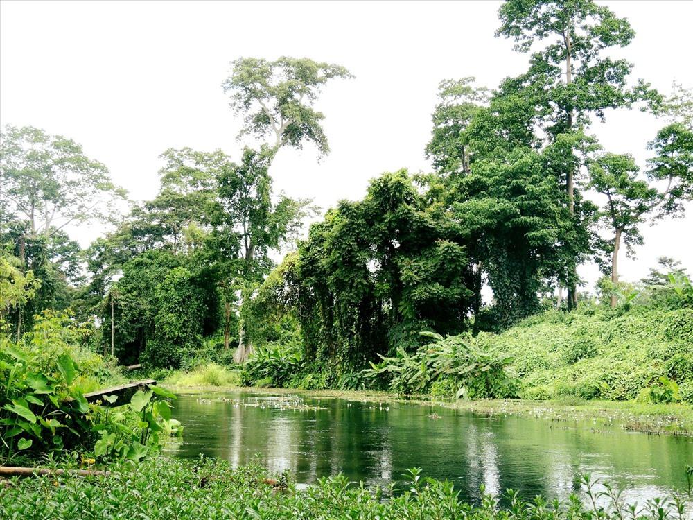 Một cánh rừng tĩnh lặng nằm trên ngọn thác Dray Sap (ảnh K.Q)