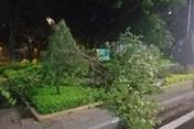 Dự báo thời tiết 31.10: Hoàn lưu bão số 5 Matmo gây mưa lớn diện rộng