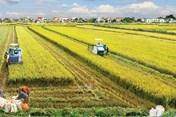 Sử dụng đất trồng không đúng mục đích bị xử phạt thế nào?