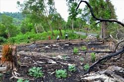 Resort lấn chiếm vườn Quốc gia: Đốt rừng xây nhà, độc chiếm bãi biển
