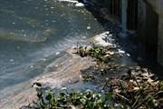 Sở Tài nguyên và Môi trường Đà Nẵng lên tiếng vụ một đoạn sông Hàn bốc mùi