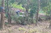 Tìm thấy phần đầu thi thể đang phân hủy trong bụi cây ở Bình Phước