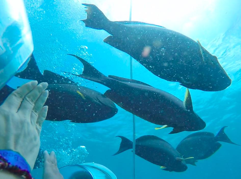 Nếu ở lâu dưới đáy biển, bạn sẽ nghĩ mình là cá. Nhờ có san hô rực màu, nhờ ánh nắng mạnh, nên dưới sâu 8m, quang cảnh vẫn trong veo như ở xứ ở thần tiên.