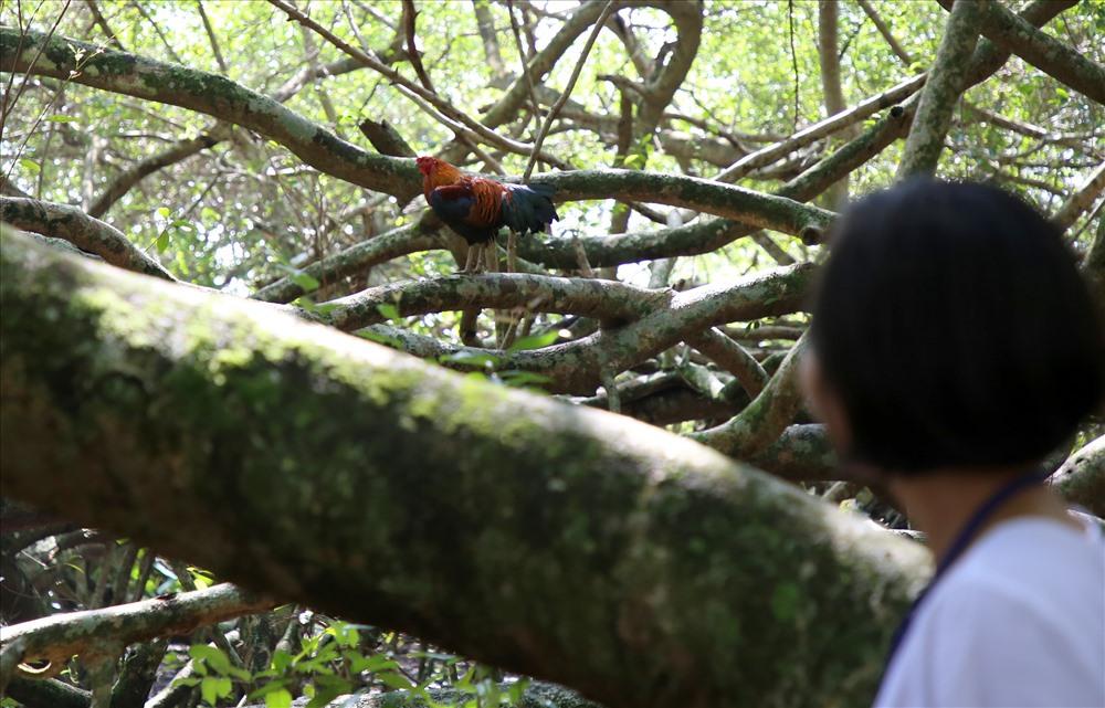 Du khách khi đến xem cây Gừa rất ngạc nhiên về sức sống, độ rộng của tán cây.