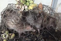 """Lý do số động vật hoang dã khỏi """"chết mòn"""" trong nhà kho"""