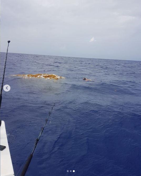 Hình ảnh lưới ma chết chóc khiến hàng trăm con cá mập bỏ mạng. Ảnh: Yahoo.