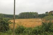"""Giám đốc chiếm đất rừng làm """"trang trại mẫu cho dân làm theo""""?"""