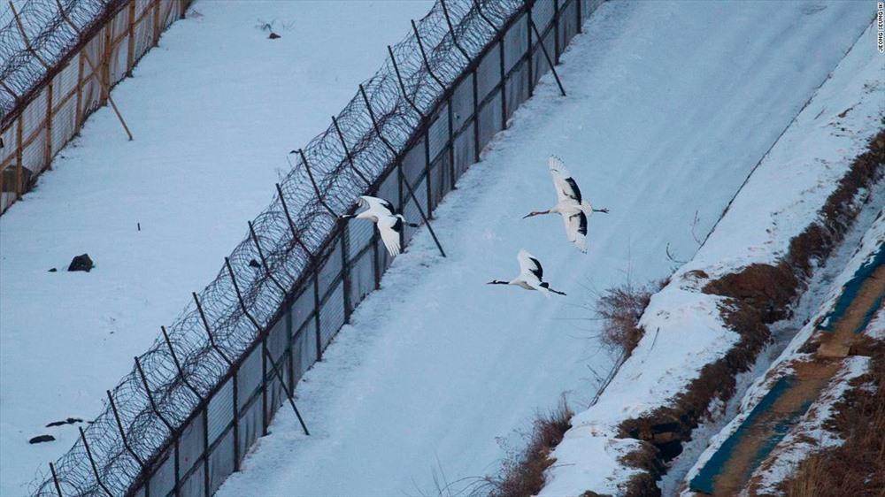 """""""Bức ảnh đáng nhớ nhất tôi chụp bên trong DMZ là một con sếu bay qua chốt gác. Nó khiến tôi nhận ra rằng hoà bình có thể giải thích được chỉ bằng một bức ảnh""""."""