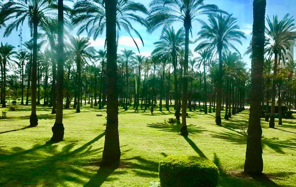 Chà là là loại cây được trồng rất nhiều ở đây. Do Alexandria nằm trong vùng khí hậu Địa Trung Hải nên tương đối mát mẻ và nhiều mưa giúp cây cối ở đây rất tươi tốt chứ không khô cằn như ở Cairo.