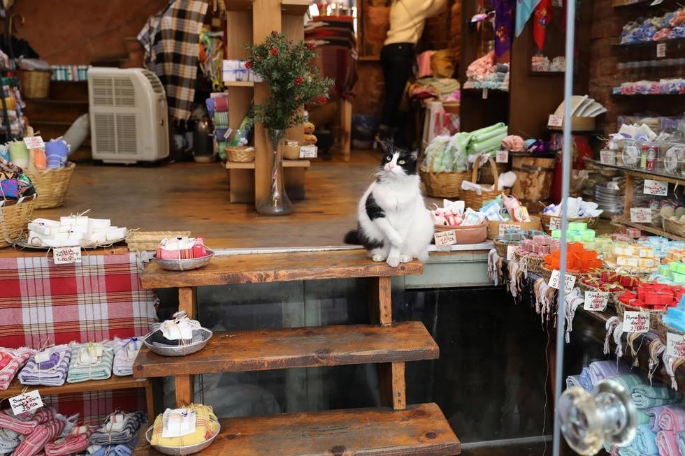 Mèo có mặt ở khắp mọi nơi. Ảnh: Reuters
