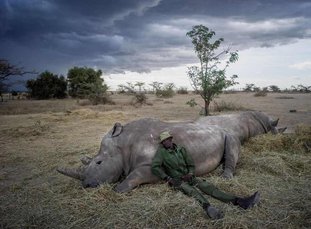 Nhiếp ảnh gia người Mỹ Justin Mott đang thực hiện một bộ ảnh có tên gọi Kindred Guardians, nói về những người dành cuộc đời mình để bảo vệ các loài động vật trên khắp thế giới. Trong chuyến đi gần nhất, ông đã tới Kenya để ghi lại hình ảnh những nhân viên bảo vệ cho 2 con tê giác trắng phương bắc cuối cùng trên thế giới là Najin và Fatu. Trong ảnh là ông Peter Esegon, 47 tuổi, một trong những thành viên cốt lõi của đội bảo vệ tê giác tại khu bảo tồn Ol Pejeta, Kenya. Ảnh: Justin Mott/Washington Post.