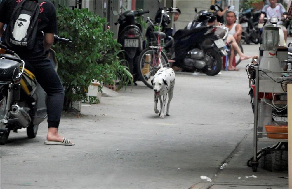 Thấy cảnh chó thả rông, không rọ mõm trên đường, không ít người bày tỏ lo ngại bởi không biết những con chó này đã được tiêm phòng bệnh dại và có cắn mình hay không?