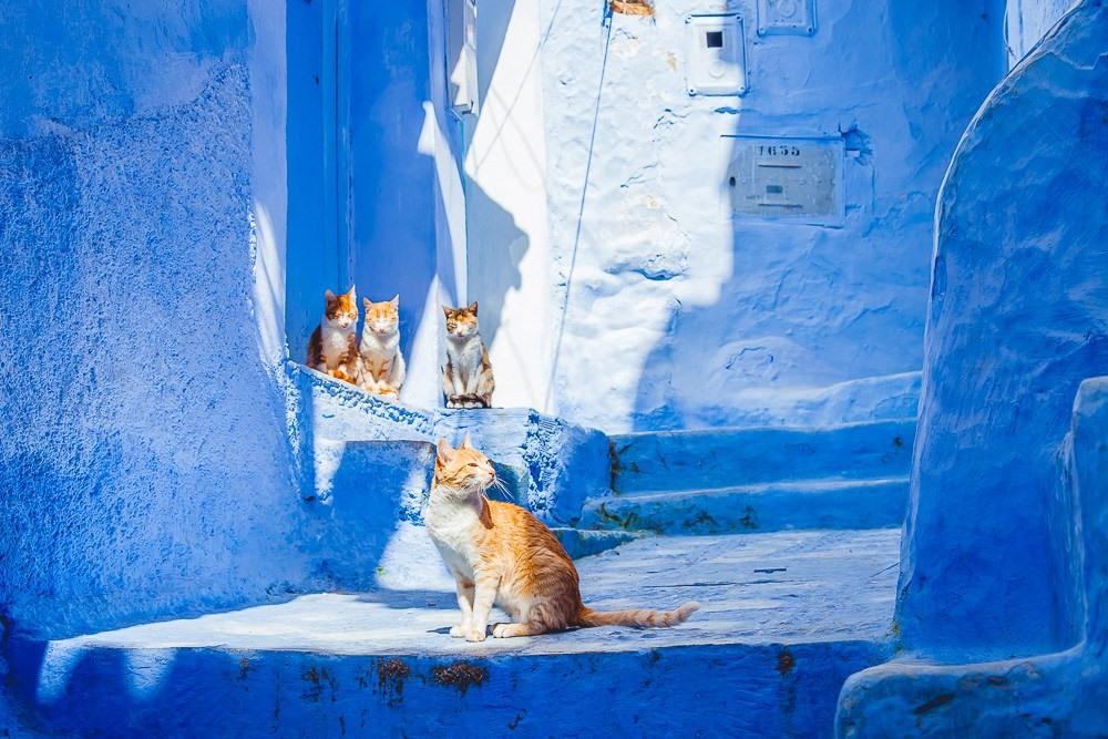 Nơi đây có sự pha trộn của kiến trúc truyền thống Morocco và màu sắc tín ngưỡng của người Do Thái. Mái ngói đỏ và những chi tiết chạm khắc gỗ phức tạp. Những con đường dốc và cầu thang trong thành phố như tô điểm thêm phần đặc biệt cho cảnh quan.