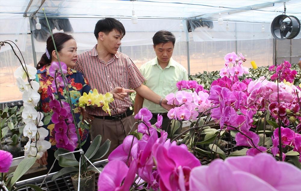 Nhìn những cây lan hồ điệp trồng thử nghiệm khoe sắc, nhiều người kỳ vọng nơi này sẽ trở thành vùng chuyên canh lan, đem lại thu nhập cho người dân bản địa. Ảnh: Hưng Thơ.